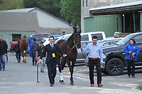 HOT SPRINGS, AR - APRIL 14: Quip #8 with trainer Rodolphe Brisset, walking from the barn area to the paddock before the Arkansas Derby at Oaklawn Park on April 14, 2018 in Hot Springs, Arkansas. (Photo by Justin Manning/Eclipse Sportswire/Getty Images)