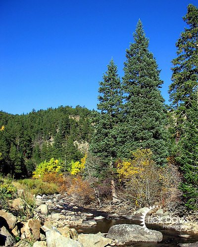 Fall color spreads through the mountains of Colorado along Boulder Creek.
