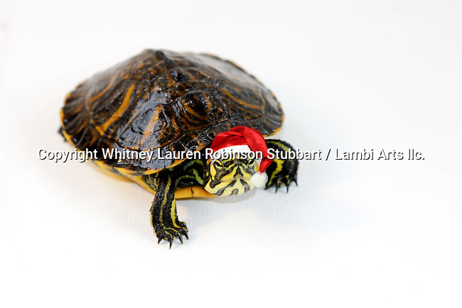 Holiday Wild Animals, Alligator, Turtle, Fish, Crane, Bird
