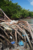 qa0078-D. garbage in the Red Mangroves (Rhizophora mangle). Key Biscayne, Florida, USA, Atlantic Ocean..Photo Copyright © Brandon Cole. All rights reserved worldwide.  www.brandoncole.com..This photo is NOT free. It is NOT in the public domain. This photo is a Copyrighted Work, registered with the US Copyright Office. .Rights to reproduction of photograph granted only upon payment in full of agreed upon licensing fee. Any use of this photo prior to such payment is an infringement of copyright and punishable by fines up to  $150,000 USD...Brandon Cole.MARINE PHOTOGRAPHY.http://www.brandoncole.com.email: brandoncole@msn.com.4917 N. Boeing Rd..Spokane Valley, WA  99206  USA.tel: 509-535-3489