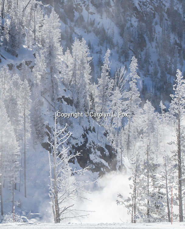 Ice and snow create a winter wonderland in Yellowstone National Park.