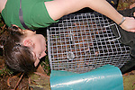 Sarah Hollinshead Transfering Possum From Trap