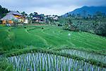Reisterrassen von Sidemen, Bali