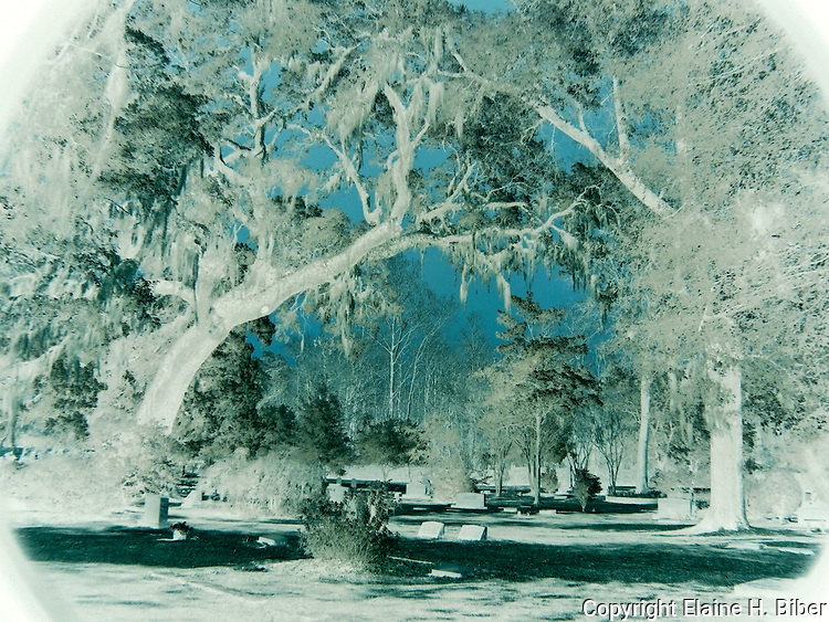 Lowcountry churchyard, infrared