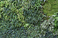 Living wall or vertical garden.