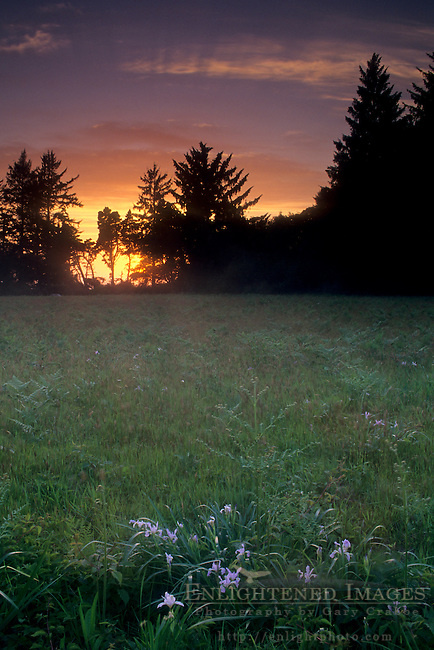 Sunset over open meadow, Patricks Point State Park, Trinidad Humboldt County, CALIFORNIA