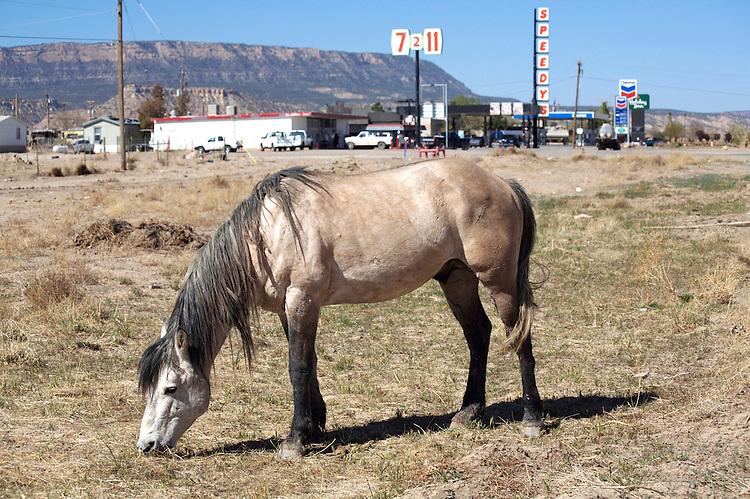 Wild horse grazes on roadside near gas station © Carli Davidson