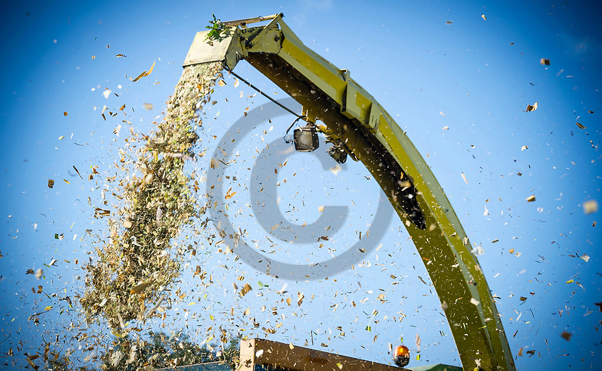 28/08/18 - DORAT - PUY DE DOME - FRANCE - Recolte de maïs d ensilage - Photo Jerome CHABANNE