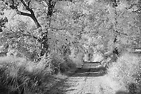 Infra Red Black & White view of rural road beneath trees, Pienza, Italy, Tuscany
