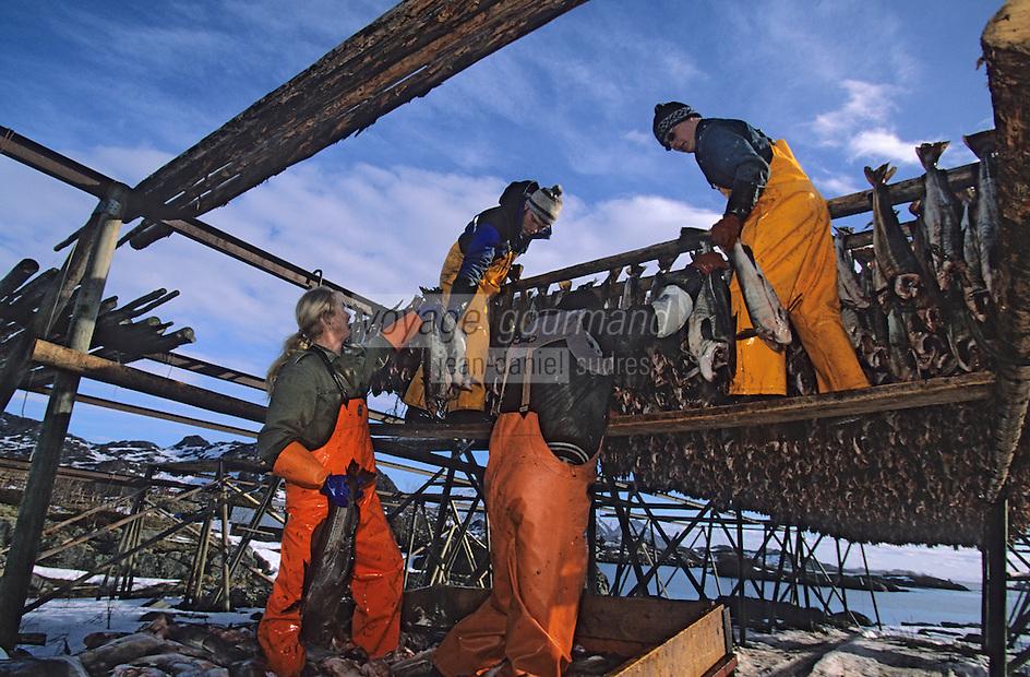 Europe/Norvège/Iles Lofoten/Ballstad: séchoir a Skrei -Cabillaud