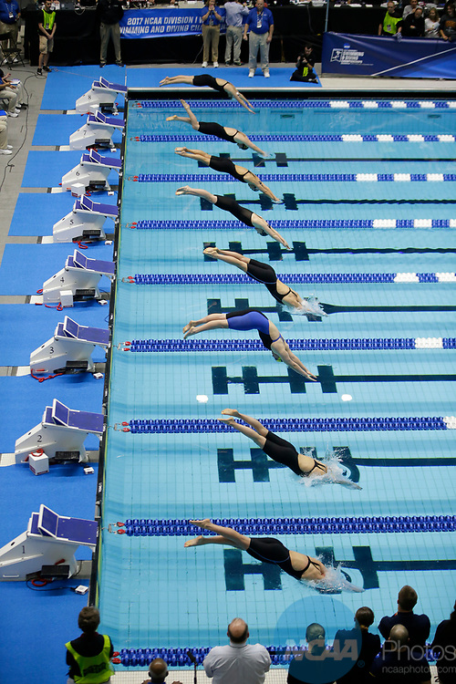 INDIANAPOLIS, IN - MARCH 18: Swimmers start the 1650 Yard Freestyle  during the Division I Women's Swimming & Diving Championships held at the Indiana University Natatorium on March 18, 2017 in Indianapolis, Indiana. (Photo by A.J. Mast/NCAA Photos via Getty Images)