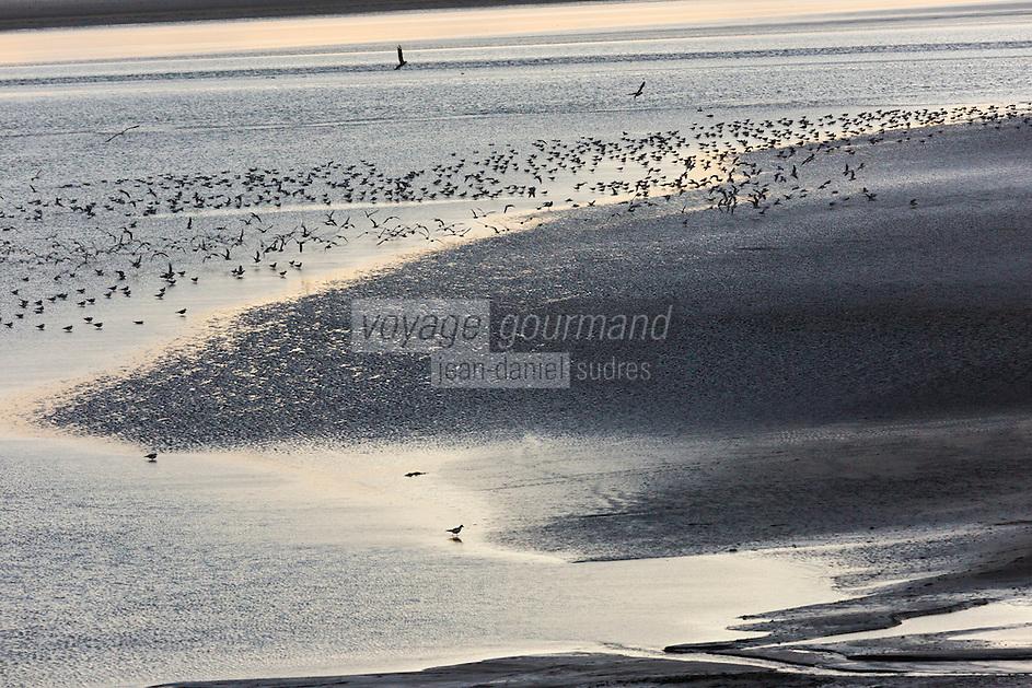 Europe/France/Normandie/Basse-Normandie/50/Manche/ Vains : Baie du Mont Saint-Michel, classée Patrimoine Mondial de l'UNESCO,  depuis   la Pointe du Grouin du Sud  // Europe/France/Normandie/Basse-Normandie/50/Manche/ Vains : Bay of Mont Saint Michel, listed as World Heritage by UNESCO,  since  Pointe du Grouin du Sud