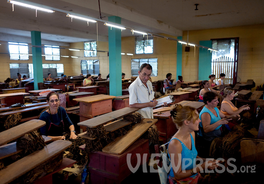 Women select tobacco leaves at a warehouse in the western province of Pinar del Rio, San Juan, Cuba, February 28, 2017. Tourists from around the world visit to Cuba during the annual festival of the cigar, celebrate from February 27 to 3 of March.  VIEWpress/Eliana Aponte.
