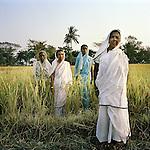 Sudhanya Khali, Unesco reserve in the Sundarban with more than 100 islands,home to the largest mangrove forest in the world..Bamuni Mondol, Seba Midya, Gouri Mondal, Bhima sundal. Tiger widows, 9 December 2010...