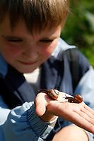 Junge, Kind mit Gefleckte-Schnirkelschnecke, Gefleckte Schnirkelschnecke, auf Kinderhand, Gefleckte Bänderschnecke, Baumschnecke,  Schnirkel-Schnecke, Arianta arbustorum, Helicigona arbustorum, orchard snail, copse snail