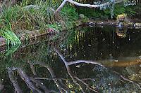 France, Manche (50), Vauville, Jardin botanique du château de Vauville, l'Abreuvoir, ancien abreuvoir reconverti en bassin avec tête de lion et Eucalyptus se reflètant