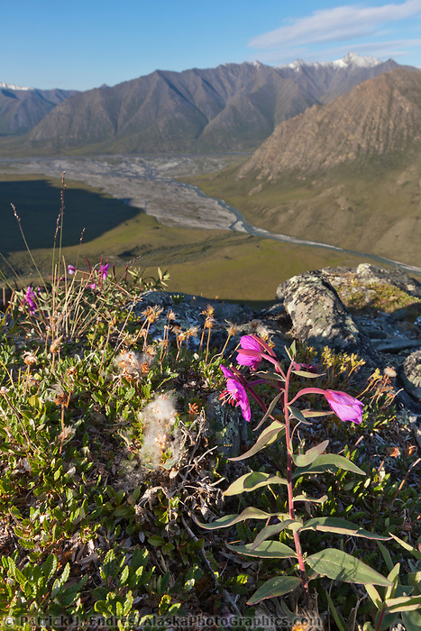 Marsh Fork of the Canning river in the Arctic National Wildlife Refuge, Brooks range mountains, Alaska.
