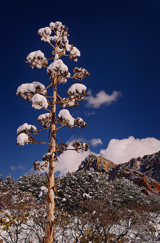 Winter Blossoms, Bear Wallow Canyon, Arizona.  Available in sizes up to 30 x 45 inches.