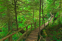 Boardwalk in the temperate rain forest<br />