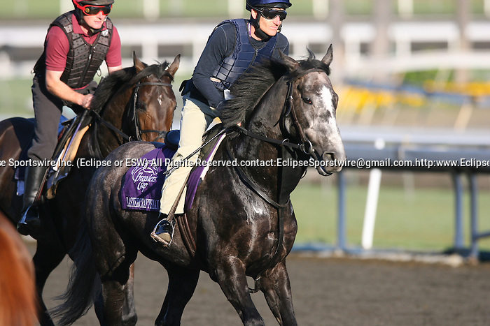 04 November 2009: Mastercraftsman on track in preparation for the Breeders' Cup at Santa Anita Park