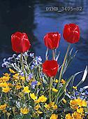 Gerhard, FLOWERS, BLUMEN, FLORES, photos+++++,DTMB3405-82,#F#