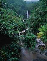 Waterfall, Banana Tree, Blue Mountains, Jamaica, Caribbean