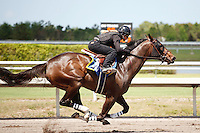 #90Fasig-Tipton Florida Sale,Under Tack Show. Palm Meadows Florida 03-23-2012 Arron Haggart/Eclipse Sportswire.