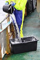 Wassereimer wird in den Bottich geleert für den Schaufischfang - 16.08.2018: Fischfang und Rundfahrt von Neuharlingersiel