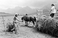 Switzerland. Canton Graubunden. Ftan. Lower Engadine valley. Ursula and Reto Pedotti are making hay. A horse pulls the cart. Manual labor. Labour force. Swiss alpine farmers. Alps mountains peasants.  © 1997 Didier Ruef