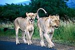 Animais em reserva natural, Unfolozi. África do Sul. 2002. Foto de Vinicius Romanini,