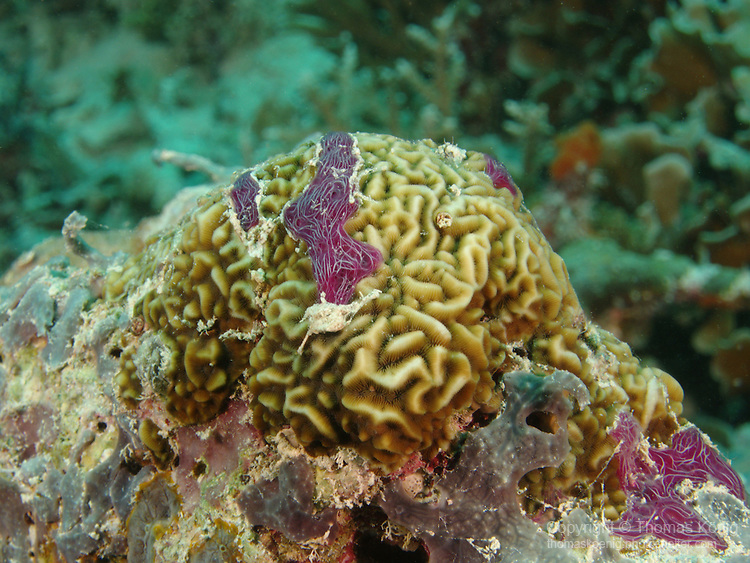 German Channel, Palau -- Coral head.