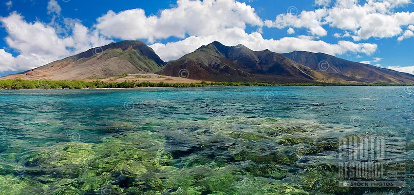 Coral reef at Olowalu, Maui, Hawaii.