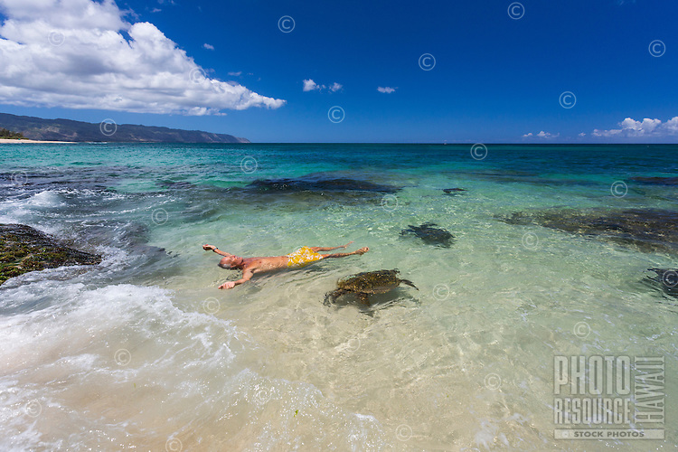 A man carefully floats with green sea turtles (honu) on the North Shore of O'ahu.