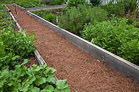 Pine needle mulch path between raised bed Vegetable garden in Colonial Williamsburg
