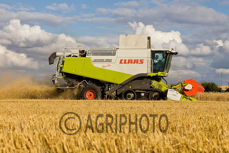 Harvesting Wheat In Nottinghamshire