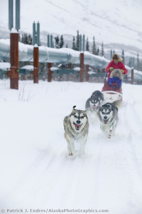 Dog mushing in the Brooks mountains near Wiseman, Alaska