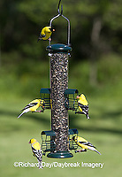01640-15718 American Goldfinches (Carduelis tristis) on squirrel proof caged port sunflower tube bird feeder, Marion Co.  IL