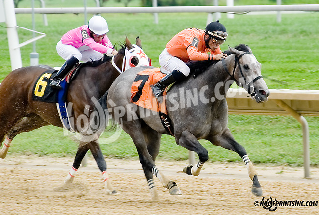 Quick N Proud winning at Delaware Park on 9/1/14