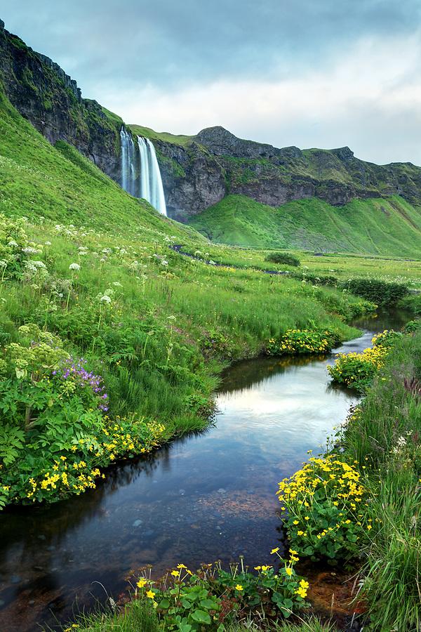 Creek flowing through wildflowers below Seljalandsfoss waterfall, South Region, Iceland