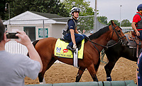 LOUISVILLE, KENTUCKY - APRIL 30: Practical Joke, owned by Klaravich Stables, Inc. and William H. Lawrence and trained by Chad Brown, walks to the track before exercising in preparation for the Kentucky Derby at Churchill Downs on April 30, 2017 in Louisville, Kentucky. (Photo by Jon Durr/Eclipse Sportswire/Getty Images)