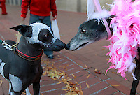 Zuma, left, dressed as a skeleton greets Matilda, right, dressed as a princess during the 7th annual Doggie Howl-O-Ween event Thursday night on the Downtown Mall in Charlottesville, VA. Over 20 Downtown businesses participated in the event that included a Doggie parade and Doggie costume contest. Photo/Andrew Shurtleff