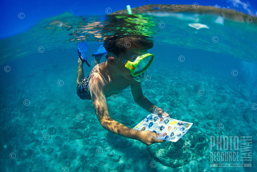 Young boy snorkels with fish ID card at Hanauma bay, Island of Oahu