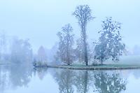 France, Loir-et-Cher (41), Cellettes, Château de Beauregard et parc, l'étang aux carpes du fleuve Amour en automne