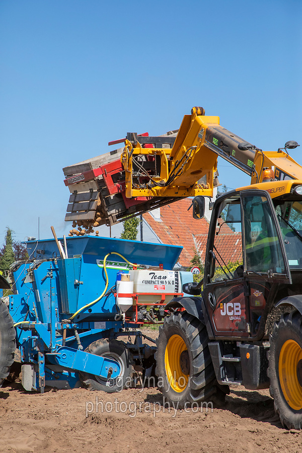 Filling the potato planter with seed - Lincolnshire, April