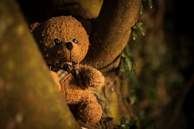 Abandoned teddy bear stuck in a treet, after being washed up on on beach.
