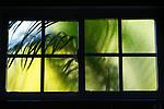 Palm in a Window