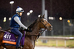 November 1, 2018: Sistercharlie (IRE), trained by Chad C. Brown, exercises in preparation for the Breeders' Cup Filly & Mare Turf at Churchill Downs on November 1, 2018 in Louisville, Kentucky. Alex Evers/Eclipse Sportswire/CSM