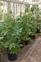 Greenhouse with plants, bench