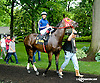 Quiet Hour before The Dashing Beauty Stakes at Delaware Park racetrack on 6/12/14