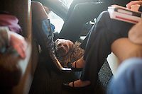 The dog of Arianna Brown, daughter of Senator Scott Brown (R-MA), stands between seats on the campaign bus between campaign stops in Framingham and Lowell, Massachusetts, USA, on Thurs., Nov. 2, 2012. Senator Scott Brown is seeking re-election to the Senate.  His opponent is Elizabeth Warren, a democrat.